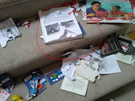 Dog training book eaten by puppy