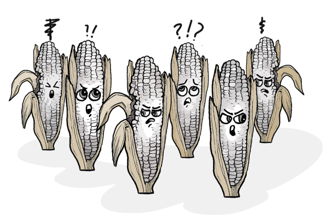 The_corn-caucuses_have_generated_some_discord