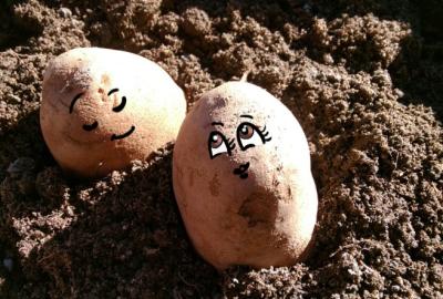 Potato_sexxors